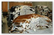 Cow hides for Sale near me at an Affordable cost   House of Hide